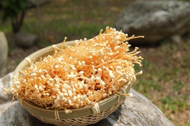 金針菇 2